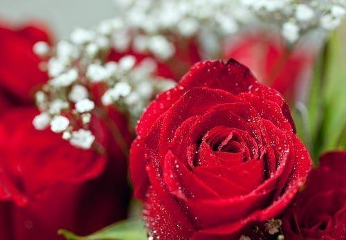 Báj, ártatlanság, tisztaság, diszkréció – rózsa