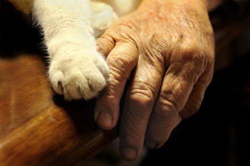 Misao nagymama és Fukumaru, a macska