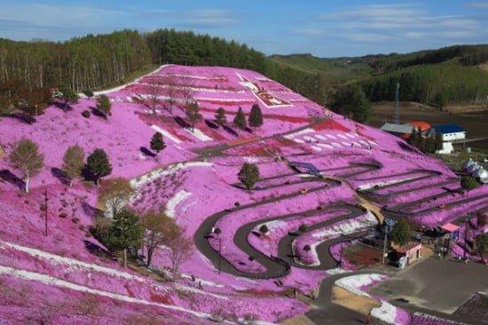 Hokkaido csodaszép virágos dombja
