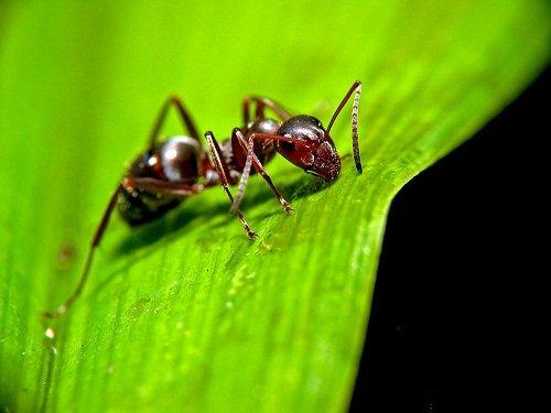 Hogyan szabaduljunk meg a hangyáktól