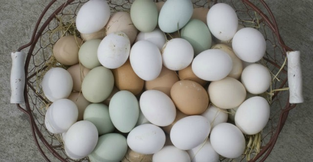 Ez a különbség a barna és a fehér tojás között