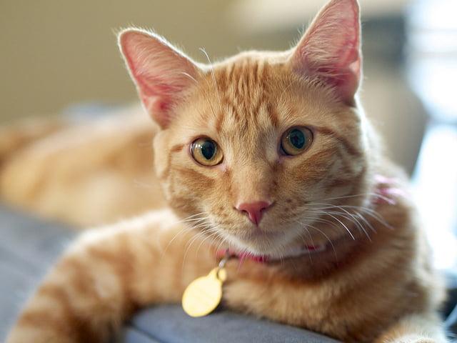 A világon először fertőzött meg macska embert tébécével