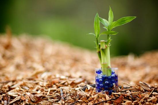 Szerencsét hozó növények, amelyeknek nem szabadna hiányozzniuk otthonunkból