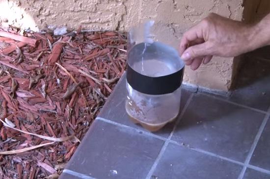 Készíts hatékony szúnyogcsapdát! Íme az olcsó recept – VIDEÓ