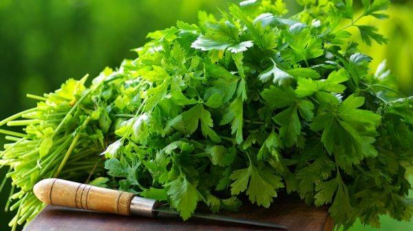 7 gyógyító erővel rendelkező növény