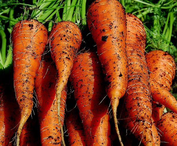 6 ok, amiért érdemes sárgarépát fogyasztani