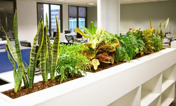 3 nagyszerű szobanövény, amely hatékonyan megtisztítja a levegőt!