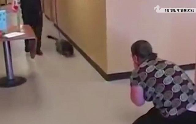 Így örülnek az elveszett, majd hazatalált kutyusok gazdijaiknak! Ha megnézed a VIDEÓ-t, te is könnyezni fogsz