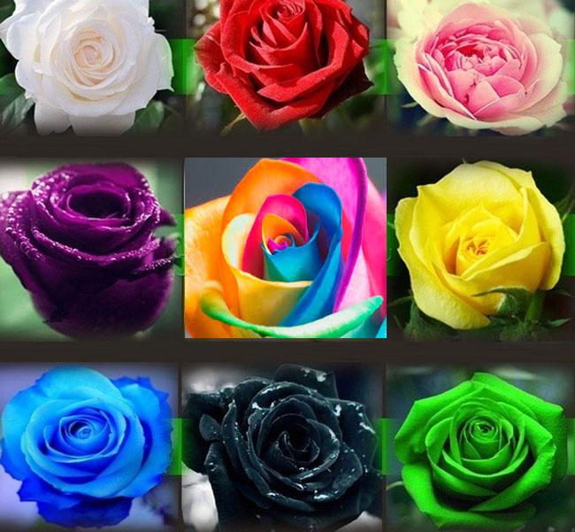 Válassz ki egy rózsát a 9 közül és olvasd el mit árul el személyiségedről. Meg fogsz lepődni az eredményen!