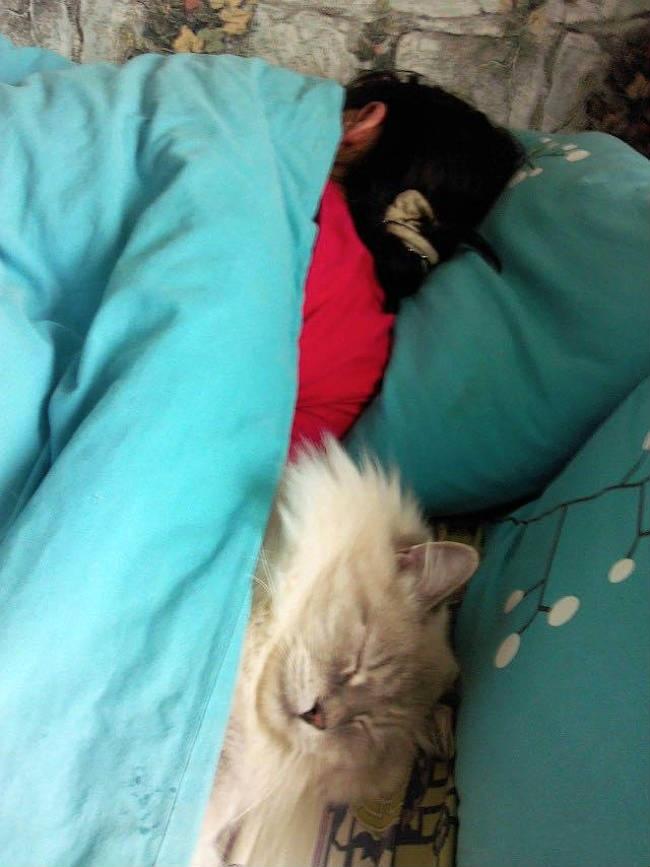 no-macskaval-alszik