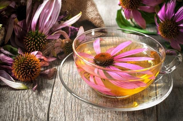Kasvirág (Echinacea), az immunrendszer legjobb barátja! Turbózzuk fel immunrendszerünket, előzzük meg a megfázást!