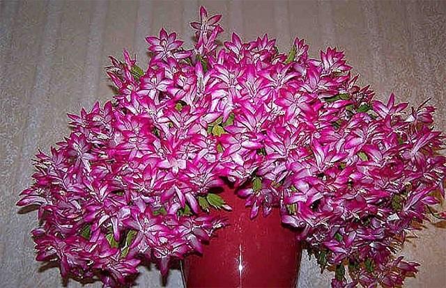 Csupán egy evőkanálnyi szükséges ebből a keverékből, ahhoz, hogy a szobanövények virágba boruljanak!