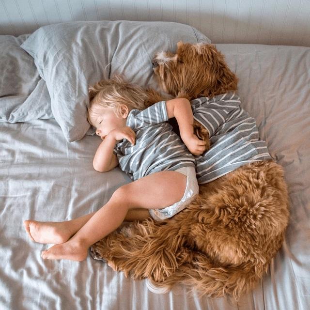 Aggódott a család, hogy az örökbefogadott gyerek nem fog tudni beilleszkedni, aztán megérkezett a családba a kutya!
