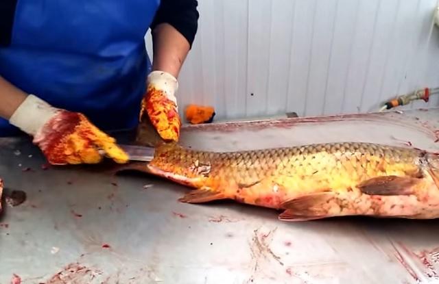 Könnyű és gyors módszer a hal pucolásához, amit mindenkinek ismernie kell! - VIDEÓ