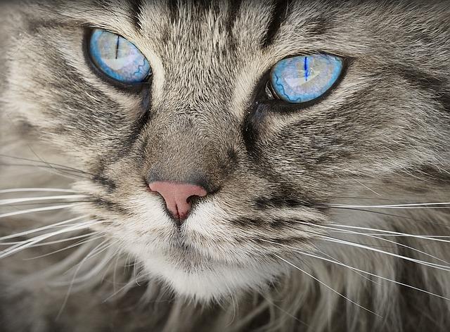 A macskák megvédik otthonunkat az ártó szellemektől és jó hangulatot teremtenek!