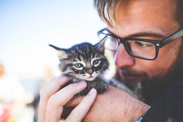 7 jele annak, hogy a cicád boldogan érzi magát a lakásodban!