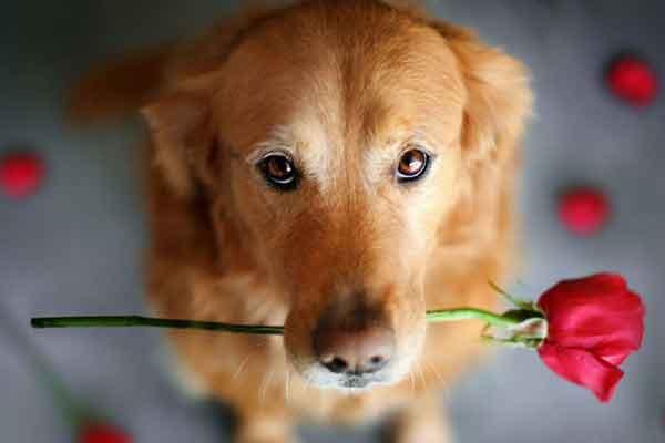Ha már nem találsz magadnak egy jó tanárt, a kutyák hoznak neked legalább 6 életleckét!