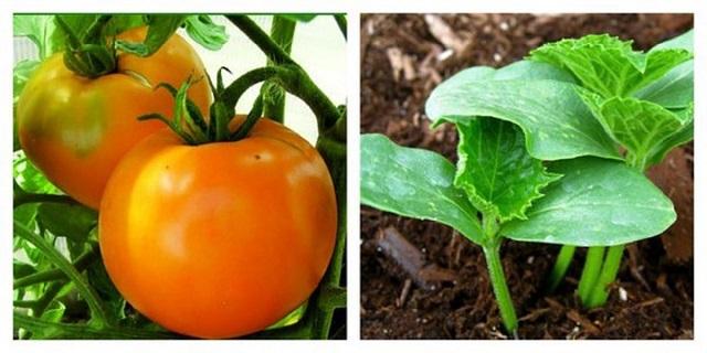 Ez a titka, hogy csodaszép kerti paradicsomaink, uborkáink legyenek!