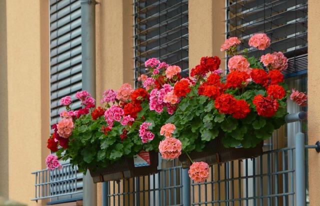Ha szeretnél otthon mindig virágzó növényeket próbáld ki ezeket a trükköket!