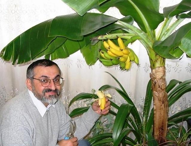 Már a lakásban is termeszthetsz banánt, ezeket mindenképpen tudnod kell, ha nekifogsz!
