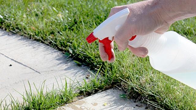 9 hatékony módszer, hogy megszabadulj a kertben lévő gyomoktól!