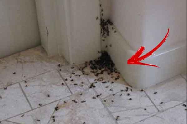 Így szabaduljunk meg a hangyáktól egyszerűen és a környezetet is kímélve!