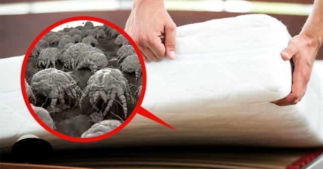 A legtöbb ágymatrac tele van penészgombával, poratkával és káros vegyületekkel! Lássuk, hogyan lehet kezelni a problémát!