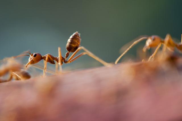 Így szabadulhatsz meg hangyáktól pár könnyű és természetes módszerrel