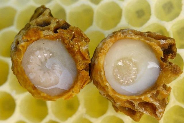 A méhpempő csodatevő gyógyhatása, amelyről neked is tudnod kell!
