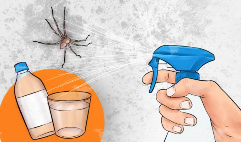 A permet, amely azon nyomban elpusztítja a házban levő pókokat és rovarokat!