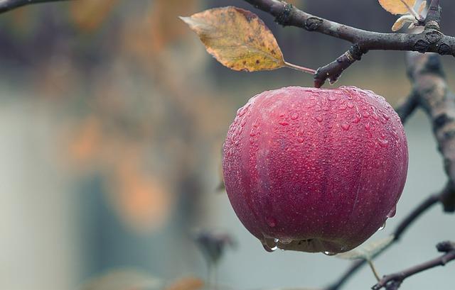 Így fogyassz el egy almát! - Thich Nhat Han meditációs gyakorlata!