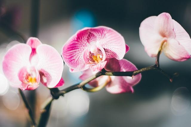 Így beszélj az orchideáddal, hogy szép nagyra nőjön és sokat virágozzon!