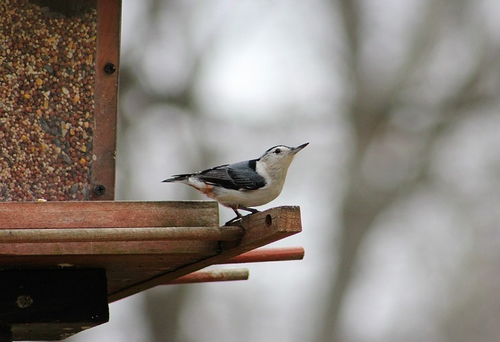 Egy megható történet, egy madárról, egy emberről, és a kettejük között kialakuló barátságról!