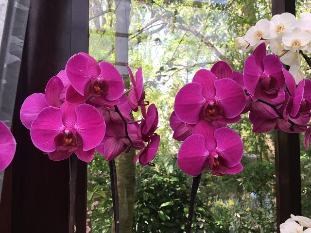 Szakértő tanácsa: Így gondozd az orchideát, hogy egész évben gyönyörködhess benne!
