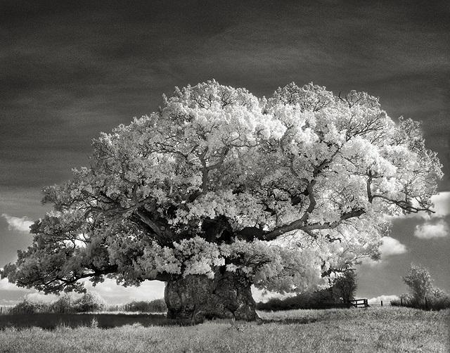 Ez a nő 14 éven keresztül utazgatott, hogy lefotózhassa a világ legősibb fáit!