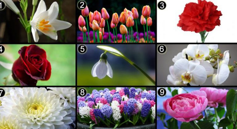 Személyiségteszt: Válassz egy virágot, és tudd meg, mi jellemző rád!