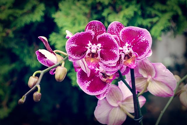 Így védd az orchideádat a kiszáradástól és a túlöntözéstől!