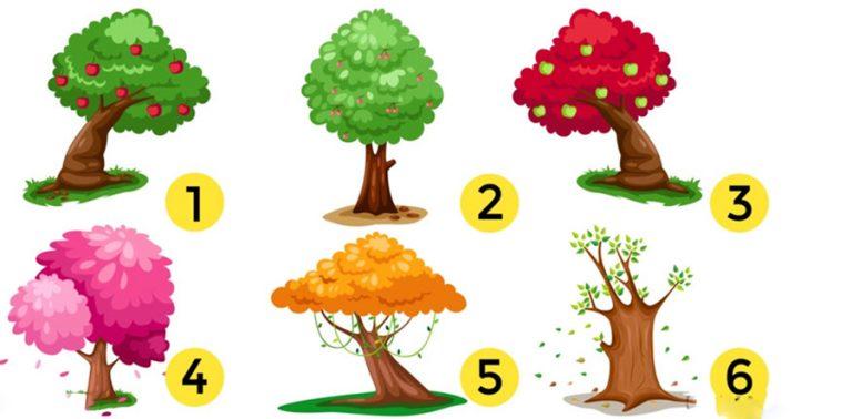 Válassz ki egy fát a 6 közül és olvasd el mit árul el személyiségedről