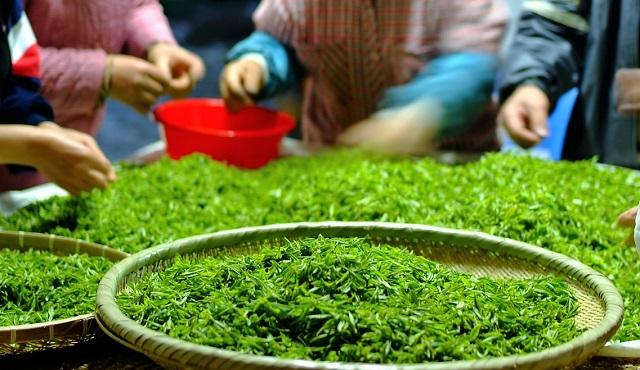 Ez történik a testeddel, ha rendszeresen zöld teát iszol! – 9 érv a zöld tea fogyasztás mellett!