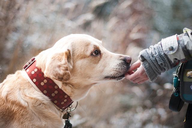 Ez a kutyafajta talál hozzád leginkább a csillagjegyed szerint!