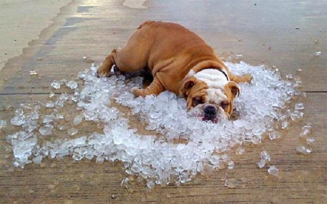5 jótanács, hogy a nyári hőségben is hidegen tartsd a tested!