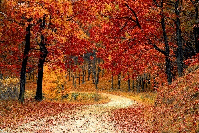 """""""Minden őszi, lehulló falevél a boldogságról suttog nekem"""" - 17 csodaszép idézet az őszről"""