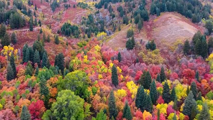 Drónnal filmezte le az elképesztő színpompába öltözött őszi tájat