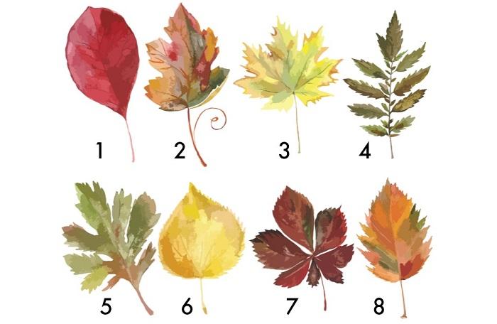 Válassz egy őszi falevelet, és tudd meg, hogy mi vár rád az év végéig!