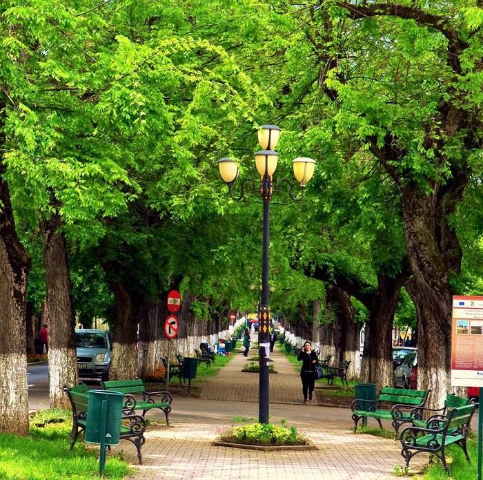 Azok az emberek, akik fákkal szegélyezett utcákban, parkok mellett élnek, kevésbé betegszenek meg szív- és érrendszeri betegségben