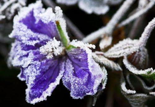 Így védd növényeid a hideg ellen