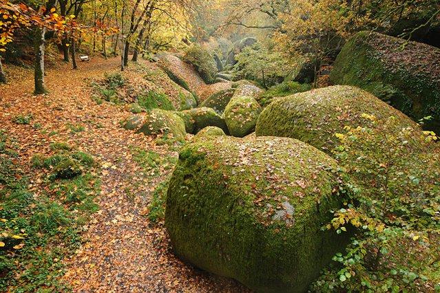 Erdőfürdő, avagy sétálj a természetben, hogy gyógyítsd meg önmagad!