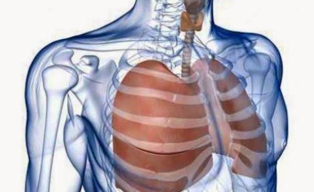 A tüdő méregtelenítése, a légzőrendszer megtisztítása
