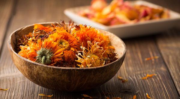 A gyógynövény, amely az égési sebeket, a pattanásokat, a gyomorfekélyt és az aranyeret is gyógyítja