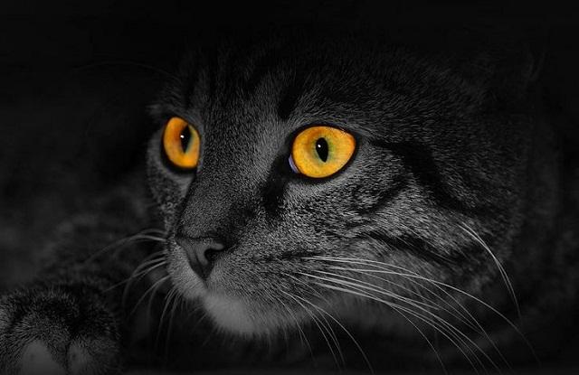 macska-szeme